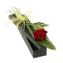 Single Red Rose in a Gift Box